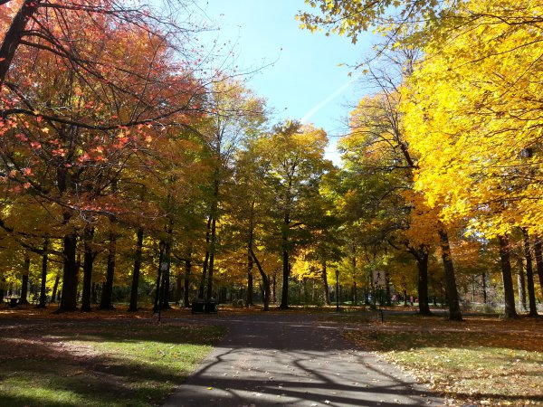 Angrignon Park Fall Montreal